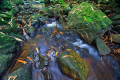 Canal in the tropical forest Stock Photos