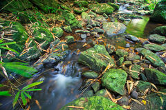 Canal in the tropical forest Royalty Free Stock Photography