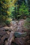 Canal vacío de la corriente en el bosque Fotos de archivo libres de regalías