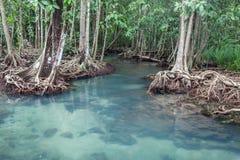 Canal vert clair comme de l'eau de roche étonnant avec la forêt Thapom de palétuvier Image libre de droits