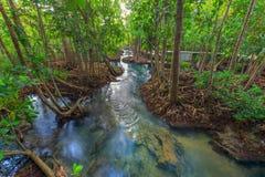 Canal vert clair comme de l'eau de roche étonnant avec la forêt Krabi Thaïlande de palétuvier Images stock