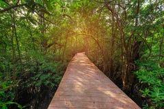 Canal vert clair comme de l'eau de roche étonnant avec la forêt Krabi Thaïlande de palétuvier Image libre de droits