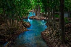 Canal vert clair comme de l'eau de roche étonnant avec la forêt Krabi Thaïlande de palétuvier Photo libre de droits
