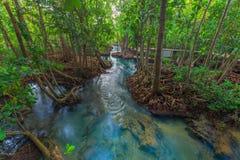 Canal vert clair comme de l'eau de roche étonnant avec la forêt Krabi Thaïlande de palétuvier Photo stock
