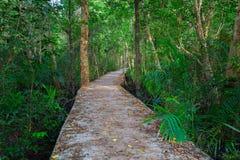 Canal vert clair comme de l'eau de roche étonnant avec la forêt Krabi Thaïlande de palétuvier Image stock