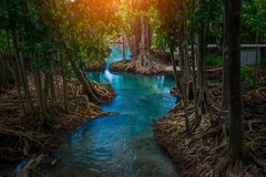 Canal vert clair comme de l'eau de roche étonnant avec la forêt Krabi Thaïlande de palétuvier Photos stock