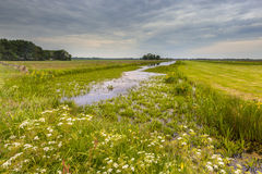 Canal with Water Soldier vegetation Royalty Free Stock Photos