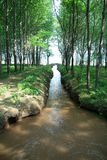 Canal in the woods in China Stock Photos