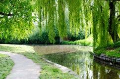 Canale con gli alberi sviluppati eccessivi Immagini Stock Libere da Diritti