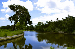 Canale con il grande albero dal lato Fotografia Stock Libera da Diritti