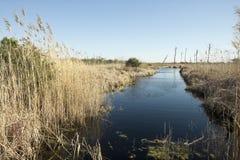 Canale d'acqua dolce in Florida immagine stock