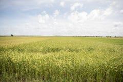 CANALE DELL'ACQUA DI AGRICOLTURA DEL KAMPONG THOM DELLA CAMBOGIA fotografia stock libera da diritti