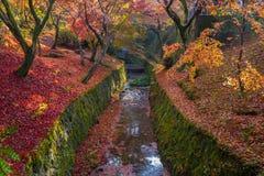 Canale delle foglie di autunno in tempio di Tofukuji Fotografie Stock Libere da Diritti