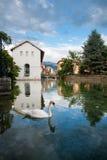 Canale di Annecy del cigno Fotografia Stock Libera da Diritti