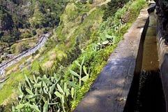 Canale di irrigazione e cactus tropicali in Madera Immagini Stock