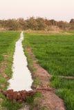 Canale di irrigazione sui campi all'oasi di Dahla Fotografia Stock Libera da Diritti
