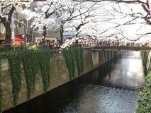 Canale di Nakameguro Immagine Stock