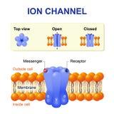 Canale ionico illustrazione di stock