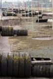 Canale selvaggio dell'acqua in inverno Fotografie Stock Libere da Diritti
