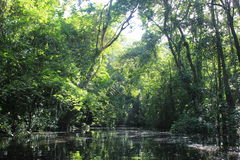 Canale tropicale stretto della foresta Immagini Stock Libere da Diritti