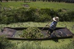 Canaletas de Xochimilco imagem de stock royalty free