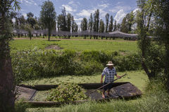 Canaletas de Xochimilco fotografia de stock royalty free