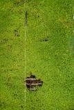Canalón del musgo y de agua Imagen de archivo
