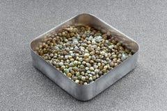 Canapa in una tazza metallica quadrata Fotografie Stock