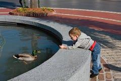 Canard alimentant de bébé photo libre de droits