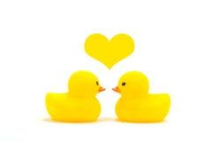 Canard d'amour Photographie stock libre de droits