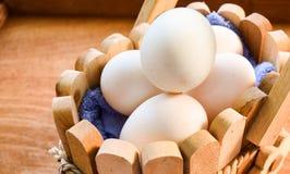 Canard d'oeufs de ferme organique images libres de droits
