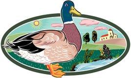 Canard dans le cadre ovale images stock