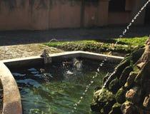 Canard dans un étang Photo stock