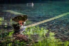 Canard dormant sur une roche Image stock