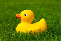 Canard en caoutchouc Image libre de droits