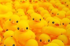 Canard en caoutchouc Photos stock