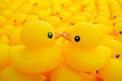 Canard en caoutchouc images libres de droits