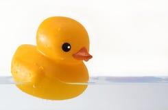Canard en caoutchouc dans le bain Photos libres de droits