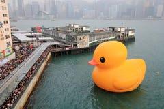 Canard en caoutchouc de Hong Kong Images libres de droits