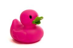Canard en caoutchouc pourpré et rose sur le blanc photo libre de droits