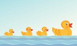 Canard et canetons Images libres de droits