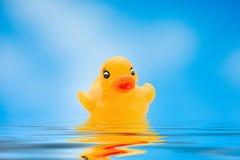 Canard jaune Photos libres de droits