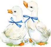 canard mignon illustration domestique d'aquarelle d'oiseau de ferme Photos stock