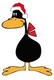 Canard noir avec le chapeau du père noël. Images libres de droits