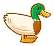 Canard sauvage Photo stock