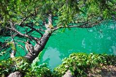 Canard sur une branche sur le lac Photographie stock libre de droits