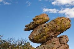 Canard sur une roche au monument national Etats-Unis de Chiricahua Photo stock