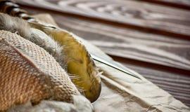 Canard tué avant la cuisson photos stock