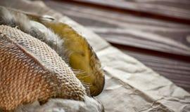 Canard tué avant la cuisson image stock