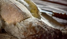 Canard tué avant la cuisson photo stock